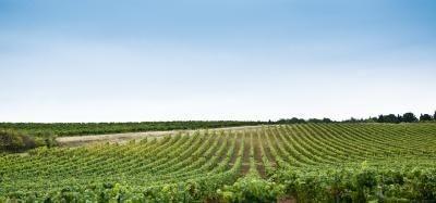 Le cause agricole di riscaldamento globale