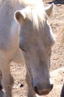 Come scegliere una coperta Affluenza cavallo