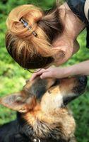 Gli acari che influiscono Cani & Humans