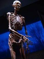 Perchè fare il lavoro di scheletro e del sistema nervoso a stretto contatto?