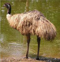 Emu Ricette a base di erbe olio