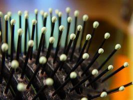 Rallenta la crescita dei capelli Diagnosi