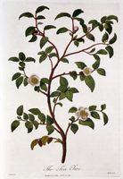 Come trattare l'eczema con Tea Tree Oil