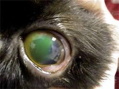 Problemi agli occhi in cani e gatti
