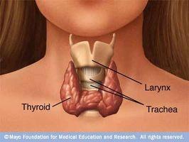 Informazioni su sintomi tiroide bassa