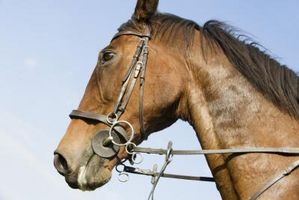Tipi di Redini per Cavalli