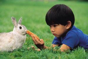 Semi che sono velenose per conigli
