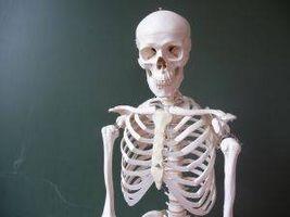 Come capire il sistema scheletrico