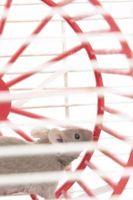 Come fare una gabbia del mouse per i bambini