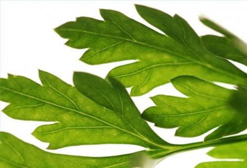 A base di erbe anti-infiammatorio per asma