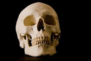 Skull sviluppo in maschio umano