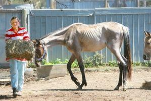 Come Nutrire un cavallo Starving