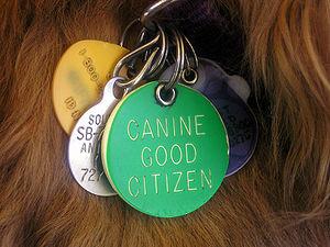 Inserzioni per cane novembre Leatherstocking Cluster mostra vicino domani