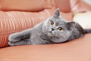 Normali livelli di glucosio del sangue per Cats