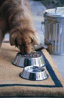 Come determinare se cibo per cani è Rancid