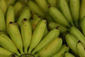 È Banana Buon per freddo allergia in Ayurveda?