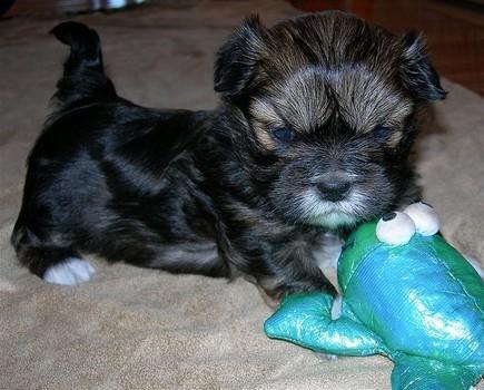 Alcuni suggerimenti su come governare il vostro cane aggressivo spaventato