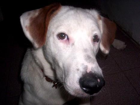 Aiuto per il vostro cane con cane verruche oculari virali