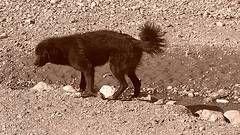 Il trattamento a base di erbe per dolori articolari nei cani