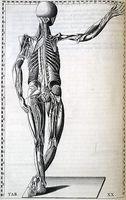 Intercostale dolore neuropatico