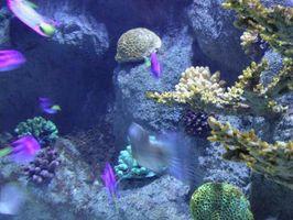 Quali sono gli effetti di alghe?