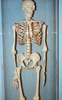 Densitometria Ossea Linee guida