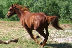 Dove si trova il cavallo che si desidera?