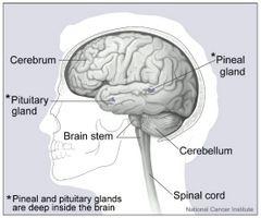 Segni e sintomi di liquido nel cervello