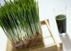 Come mietitura del grano erba che continua a crescere