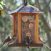 Alimentatori dell'uccello e la malattia di Lyme