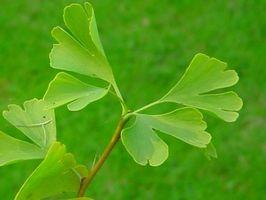Ricette a base di erbe per alleviare il dolore e favorire la guarigione