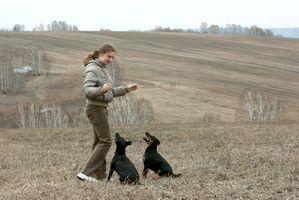 Dosaggio di radice di valeriana per i cani