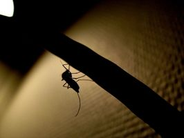 Fisiopatologia della dengue emorragica