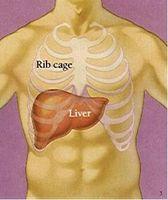 Completa Pulizia del Fegato