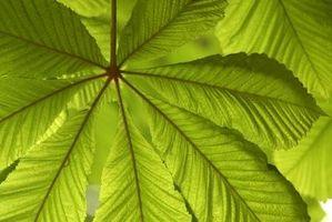 Tipi di piante medicinali