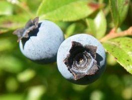 Naturale Herb Cure per il diabete