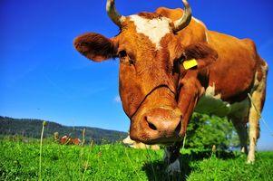 Che cosa è collagene bovino?