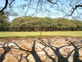 L'attività Antidiabetici di Ficus