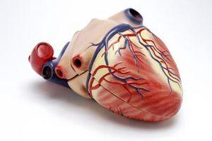 Quali sono le tre cose Aiuto spingere il sangue nelle vene?